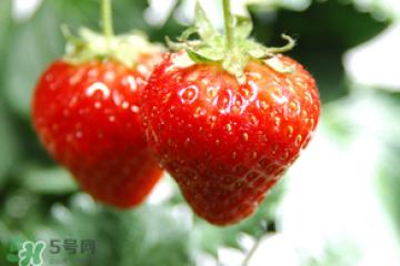 小孩咳嗽可以吃草莓吗?小孩发烧可以吃草莓好?