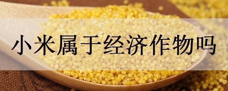 小米属于经济作物吗