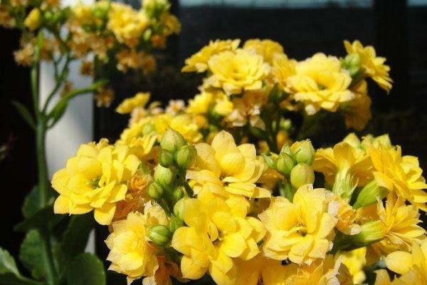有哪些好听的花名及植物名 绝美又有深意的花名